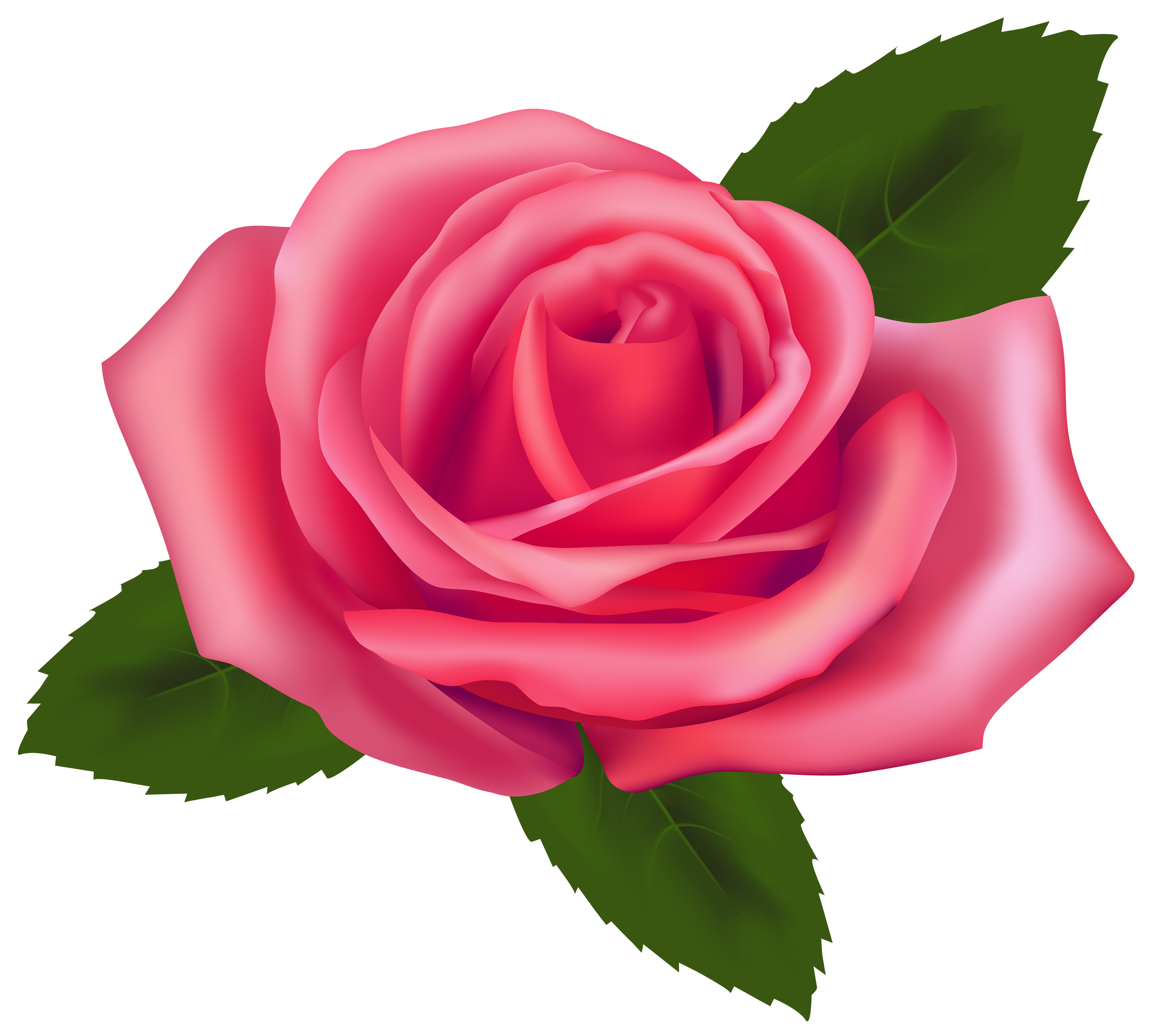 Free Pink Rose Picture