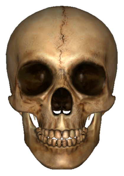Skeleton Head Photos 18221