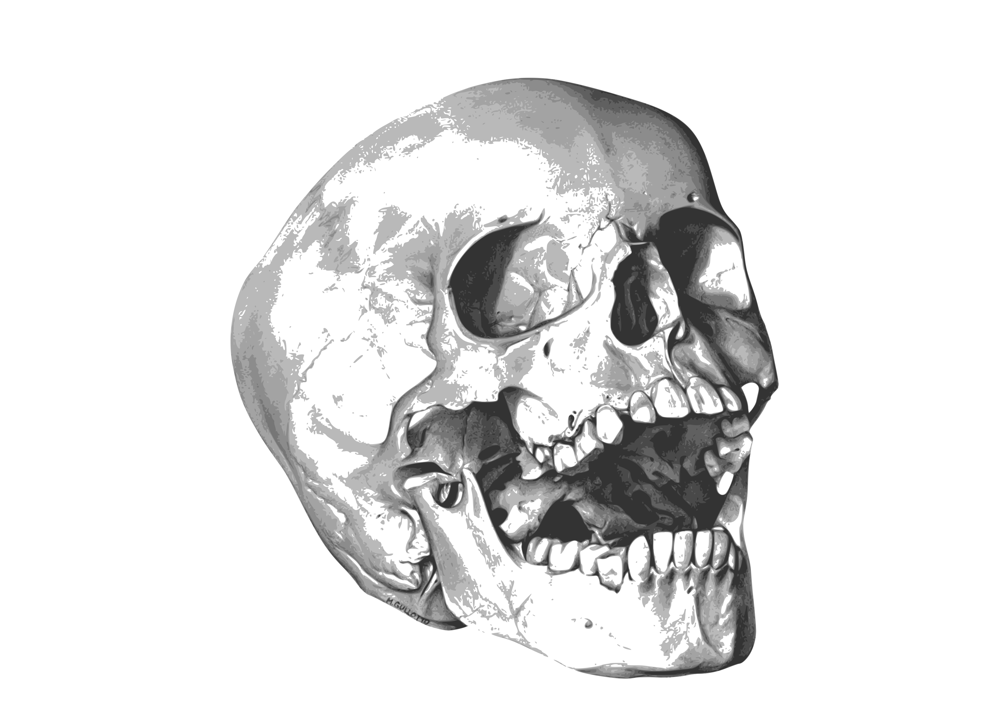 Skull HD Image PNG Images