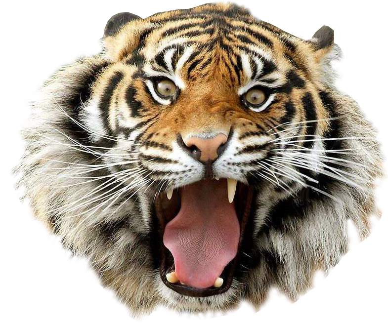 Angry Tiger Transparent Pictures 4744