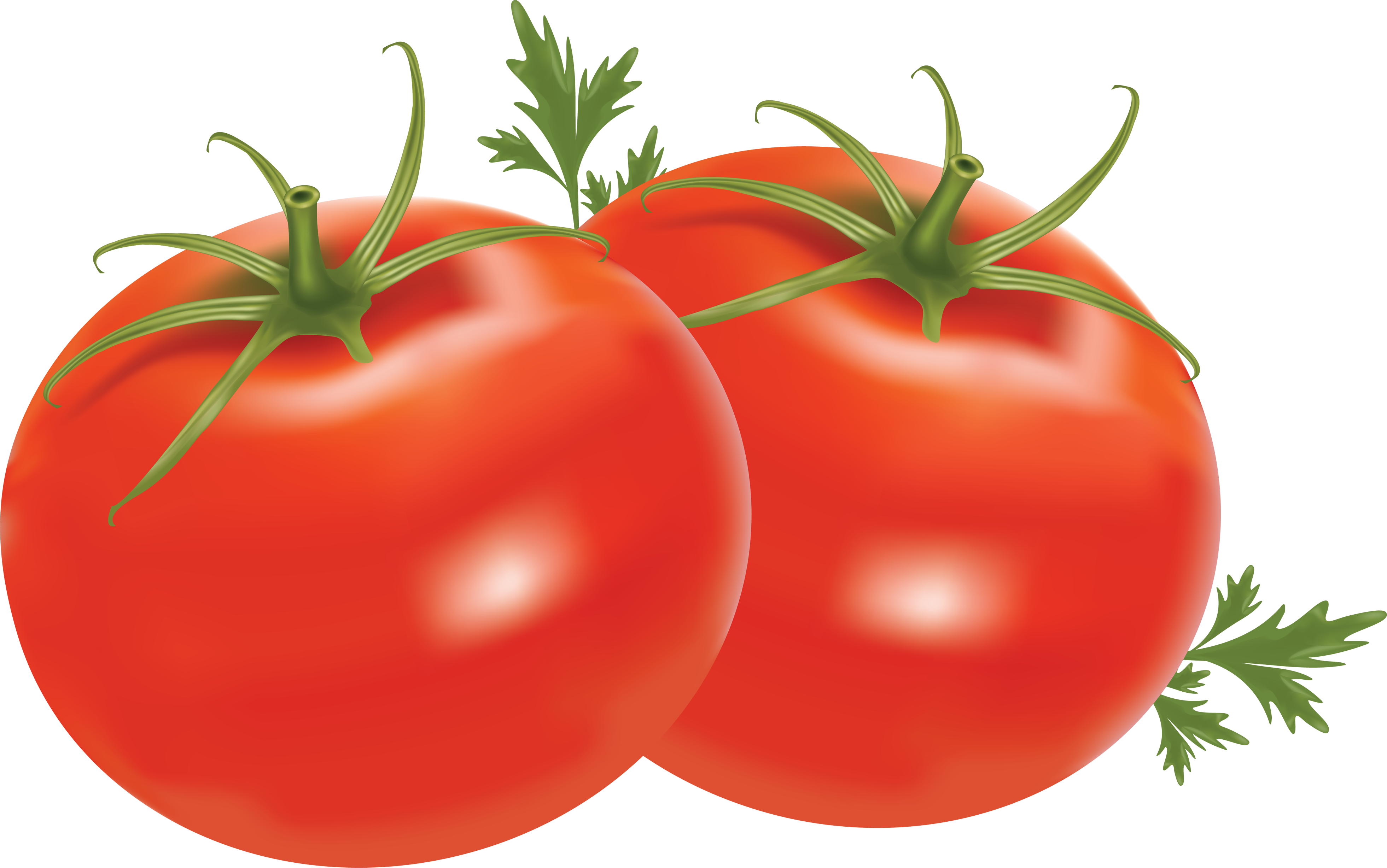 Tomato Picture Background PNG Images