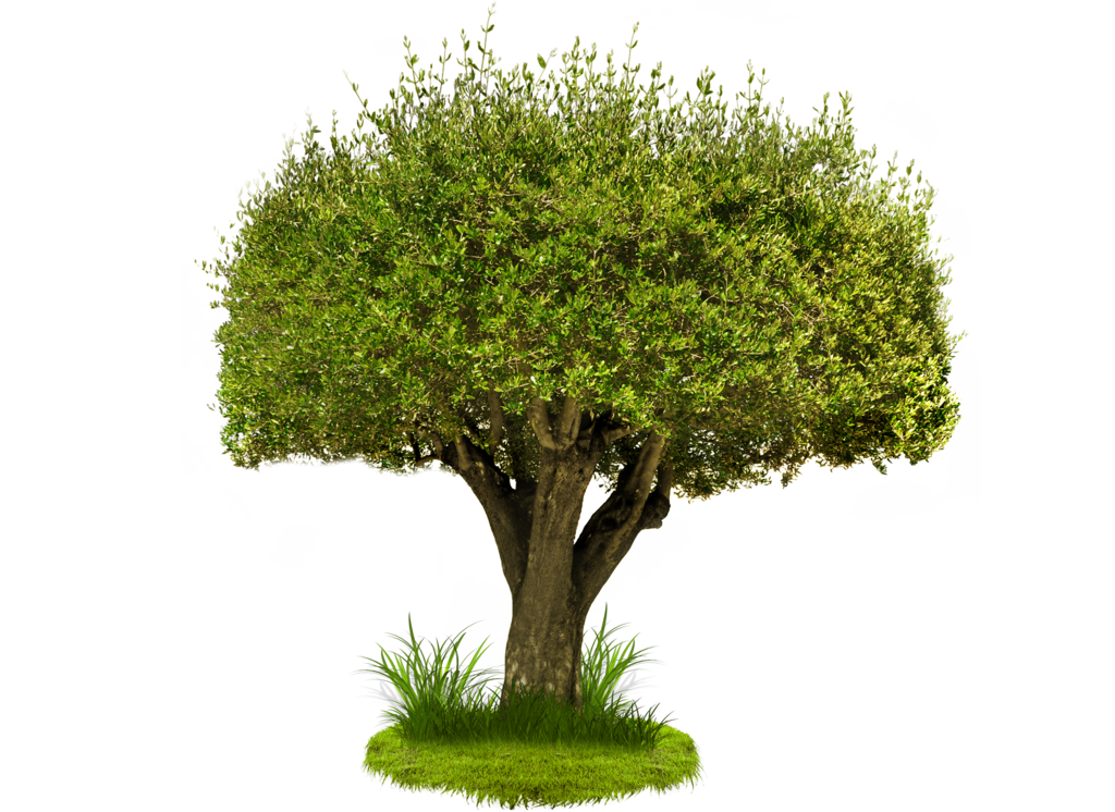 Hd Green Tree Png Image  6400