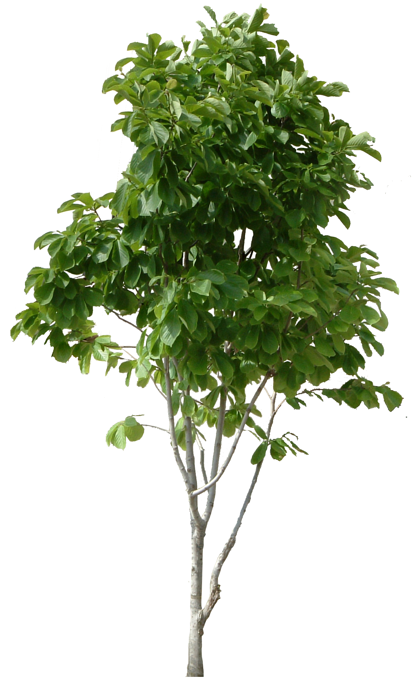 Hd Tree Png Cool Tree Image 6416