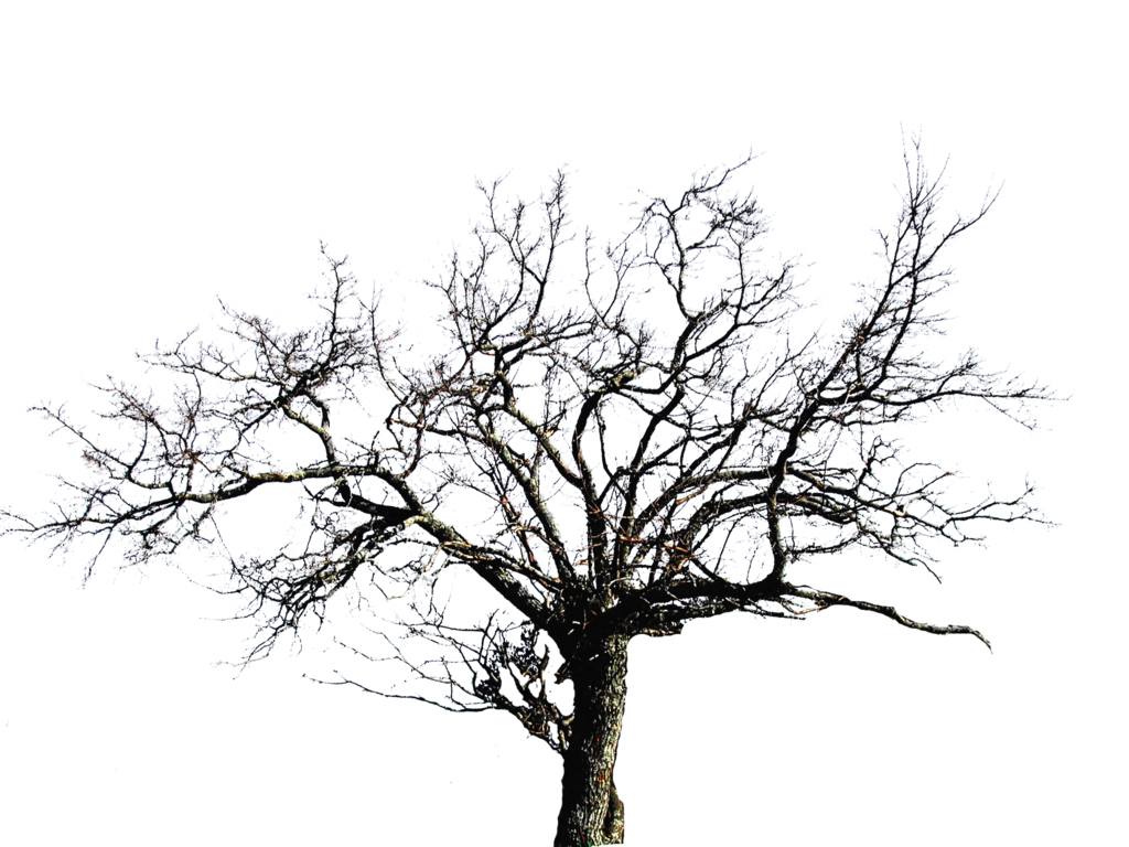 Leafless Tree Png Images 6419