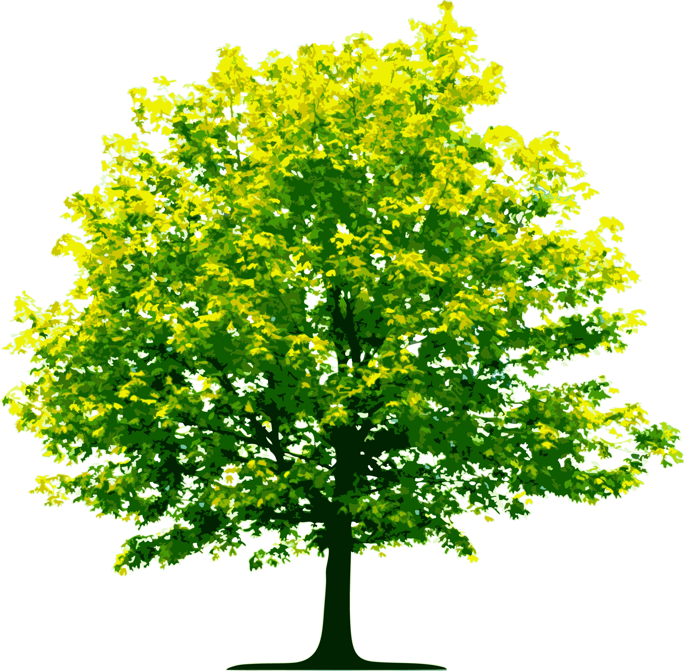 Nature Tree Png Image 6408