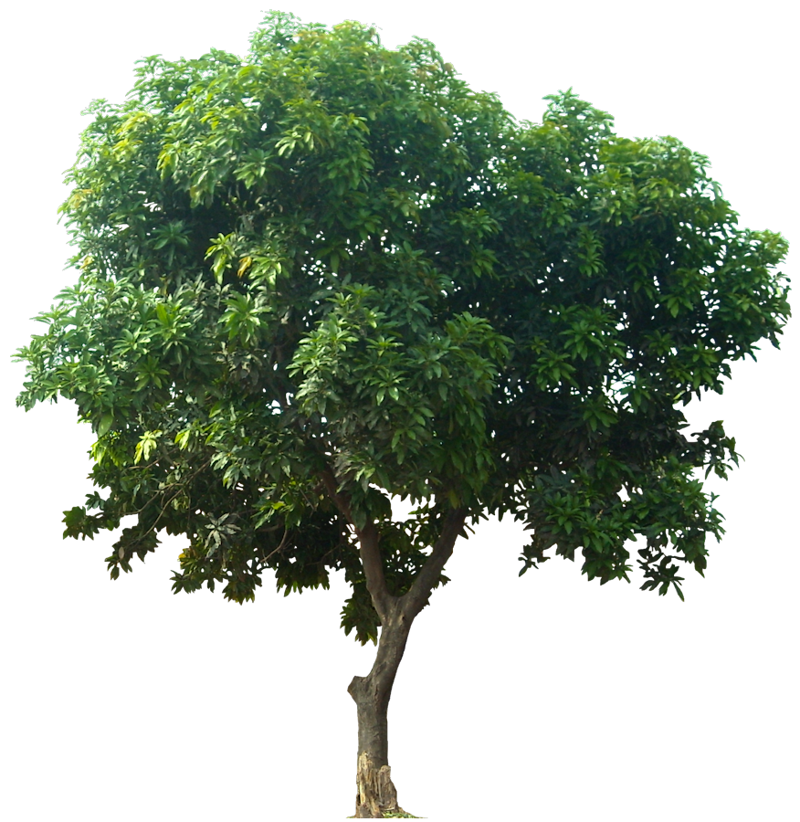 Plant Tree Png 6389