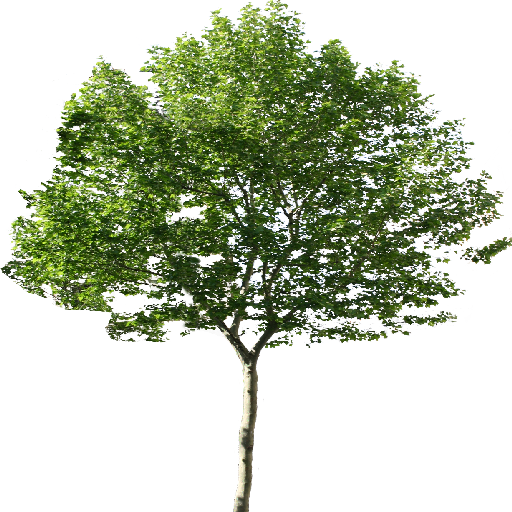 Single Tree Png 6388