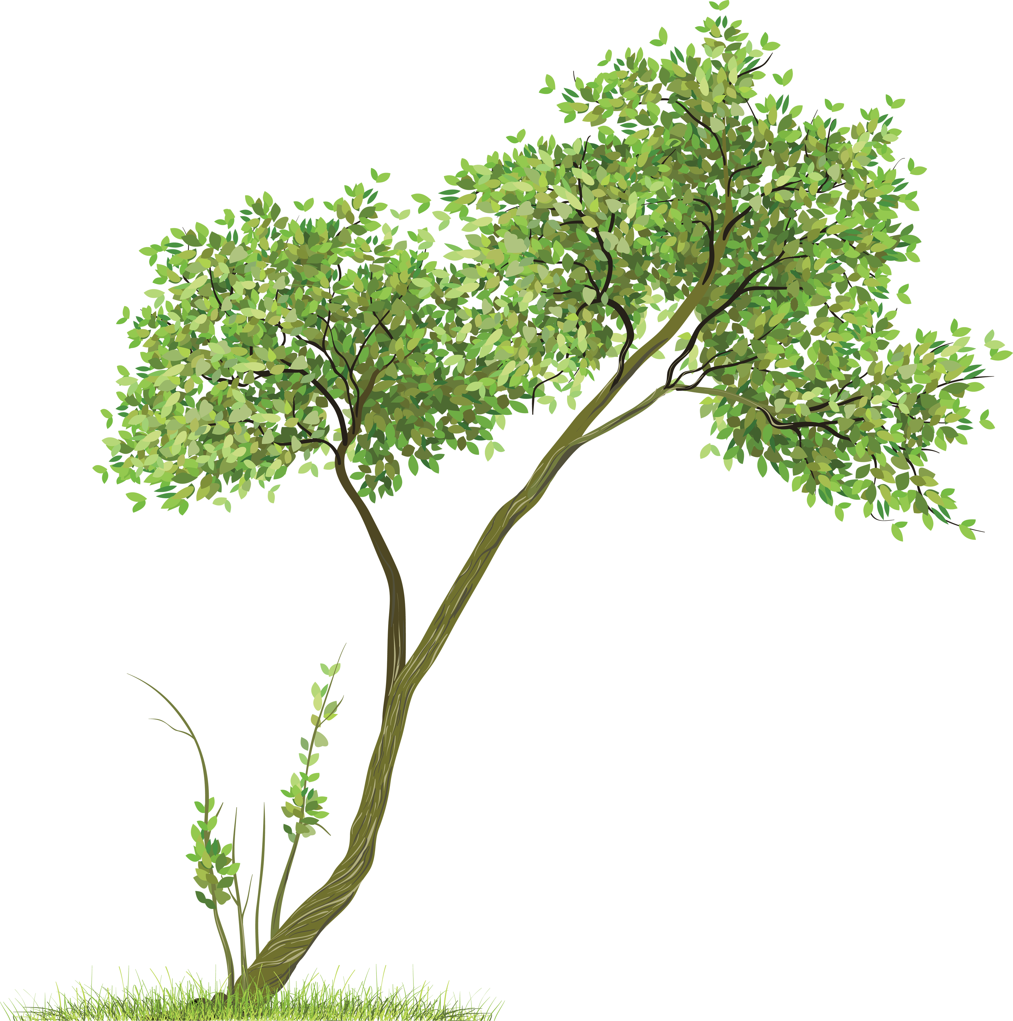 Tree Cutouts Architecture Png