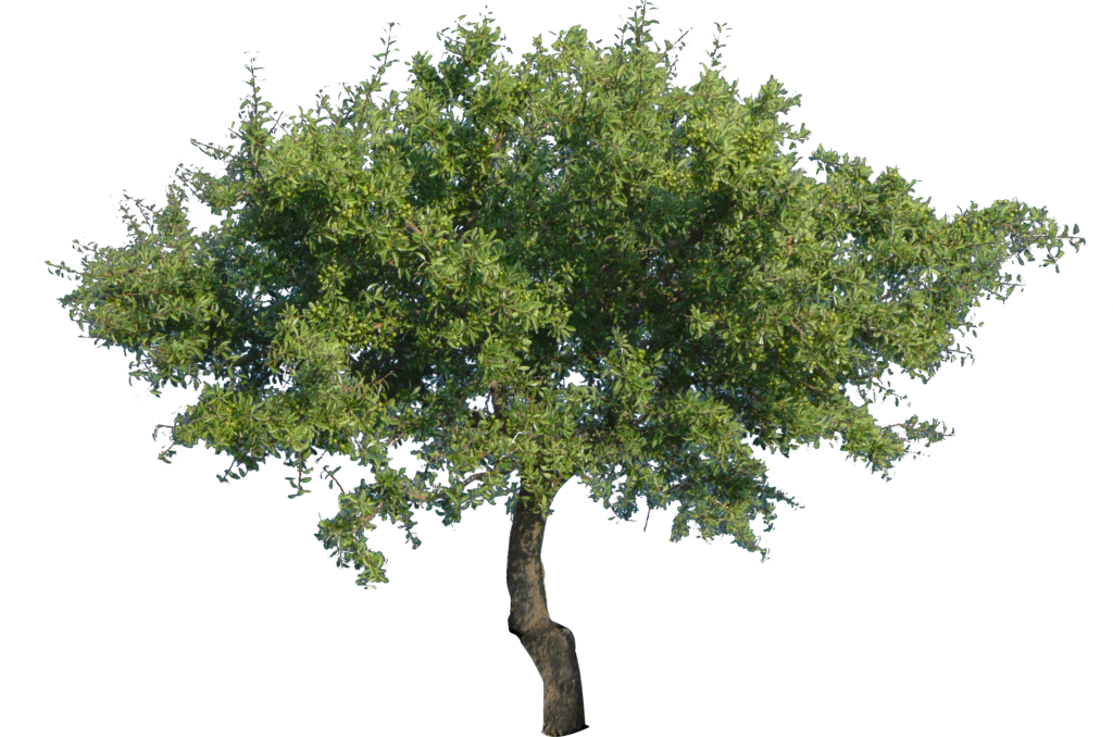 Tree Photo Png 6401