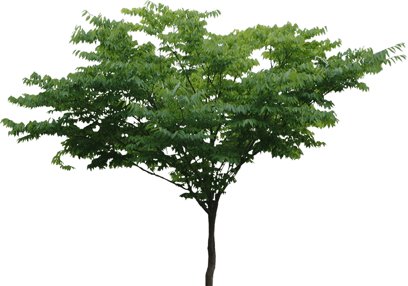 Tree Png Transparent Image 6417