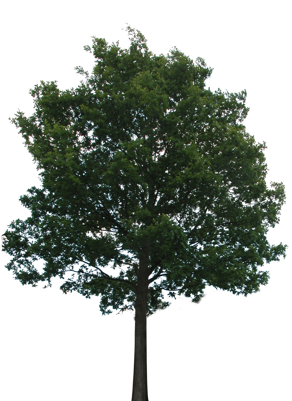 Tree With Transparency Png 6394