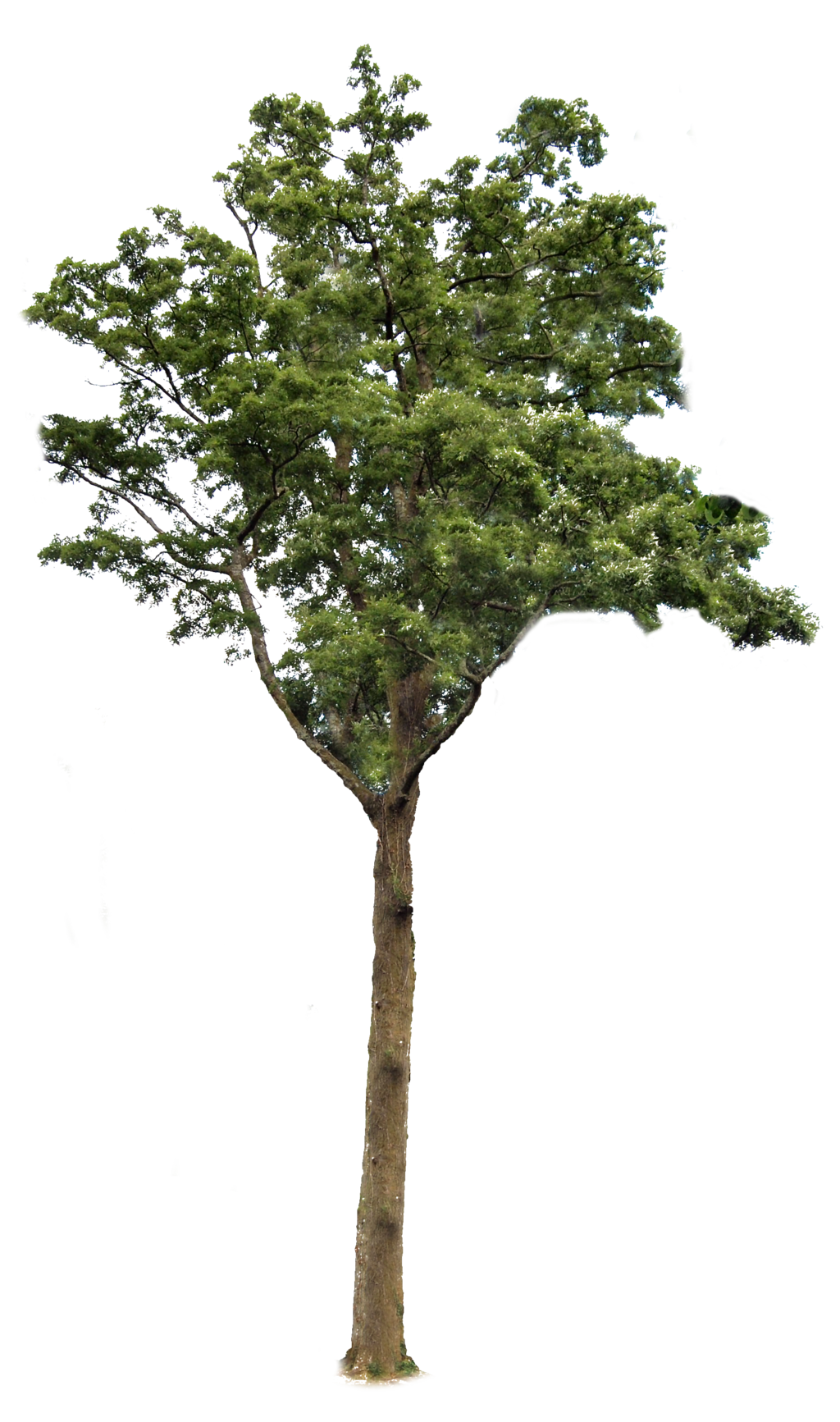 Tree With Transparent Background 6390