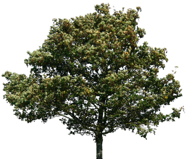 Trees Green Png 6413