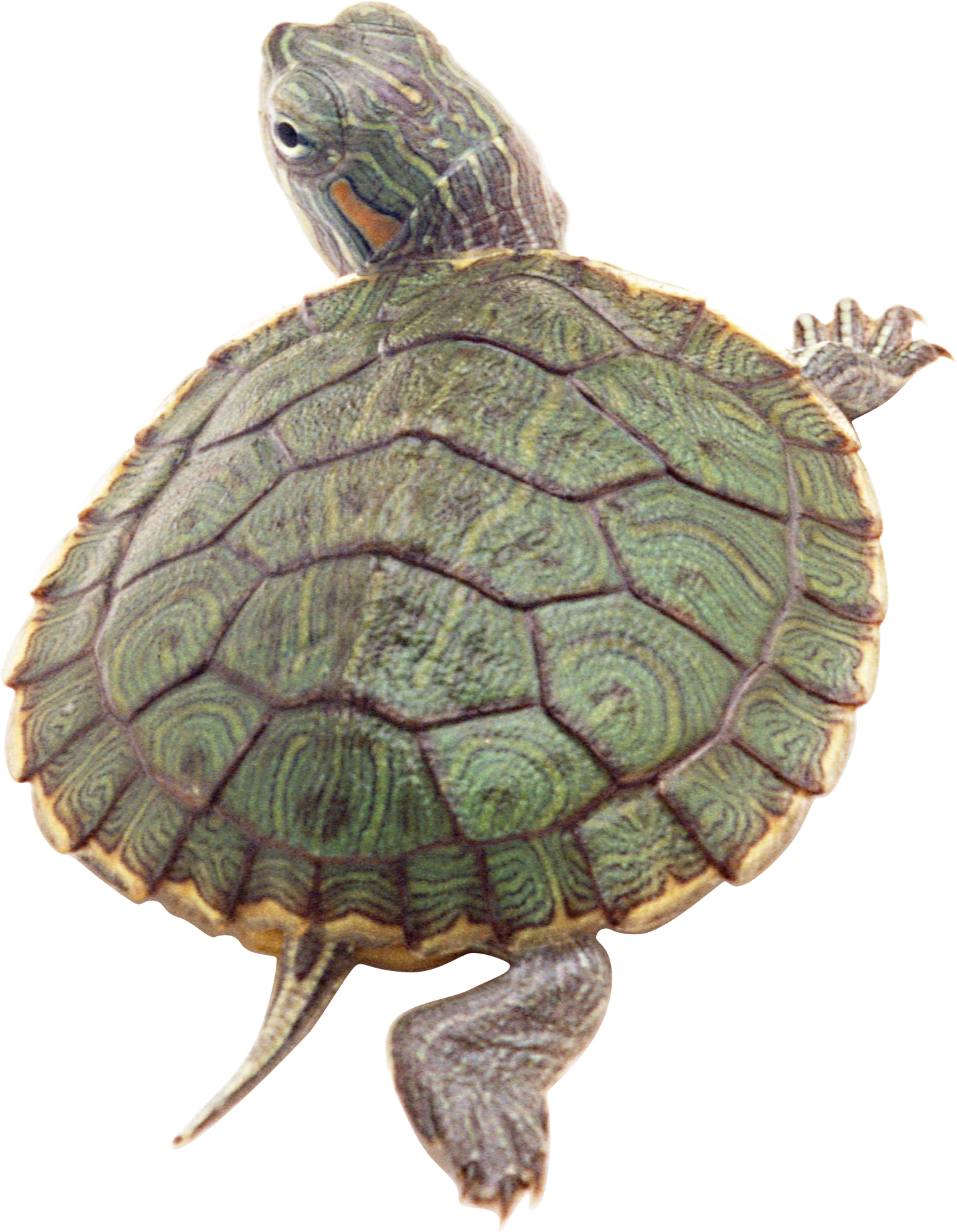 Turtle Clipart Hd 16872