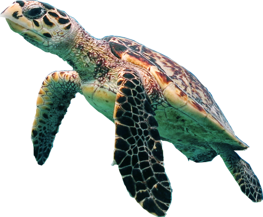Sea Turtle Wonderful Picture Images 16851