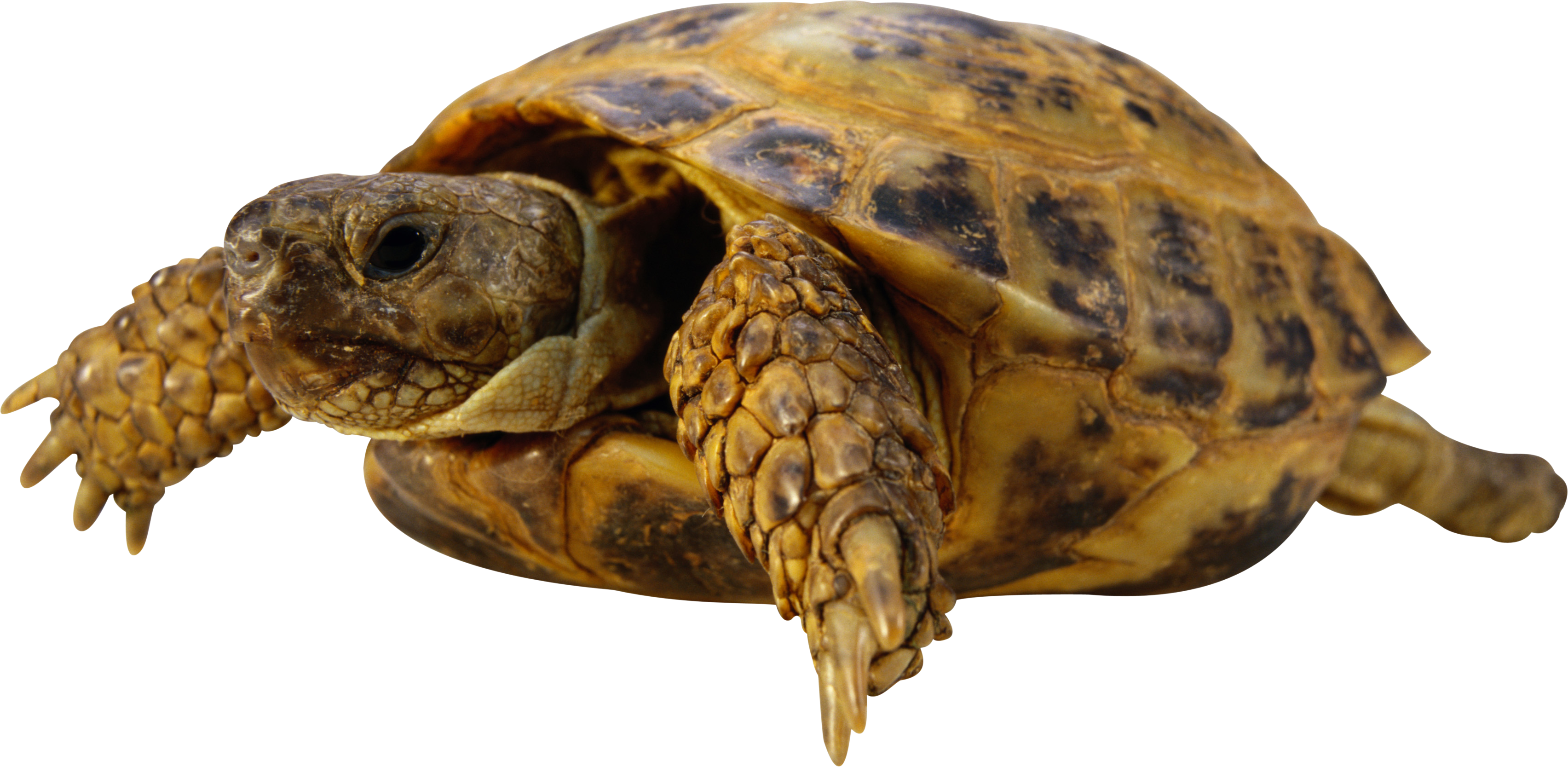 Download Turtle 16874