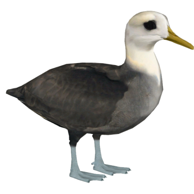 Black Albatross The Bird Image Free Download PNG Images