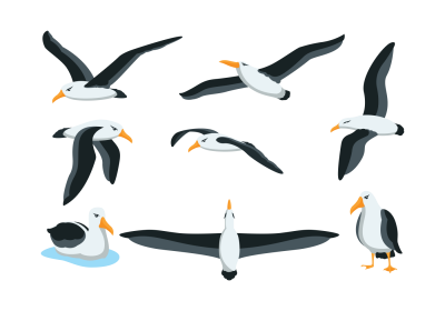 Albatross Clipart Transparent Image Of Standing In Different Cases PNG Images