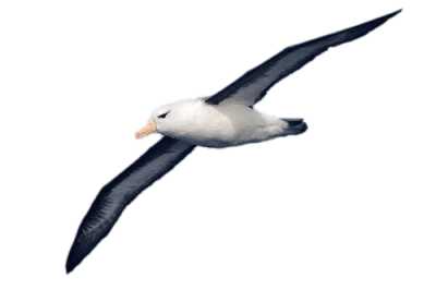 Download Wide HD Picture Of Bird Wings Albatross Png PNG Images