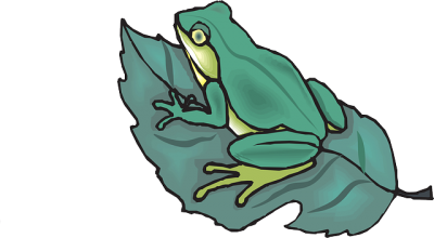 Leaf On Top Of Amphibious Frog Clipart, Frog Drawing, Drawing Sheets, Cartoon PNG Images
