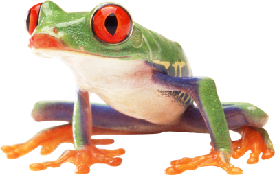 Amphibian Frog With Red Eyes Colored Varieties HD Transparent