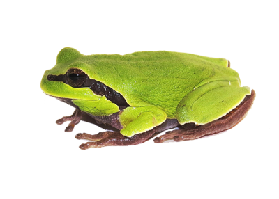 Camdibi Pistachio Green Frog Black Patterned Varieties PNG HD, Water, Lake, River PNG Images