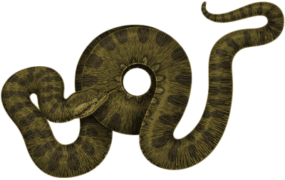 Download Green Curled Anaconda, Footless Reptile PNG Image PNG Images
