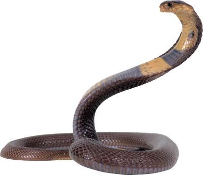 Tropical Forest, River, Anacondas Sound Picture, Black Snake Body PNG