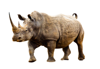 Brown Rhino Animal Photo Png