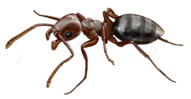 Ant Clipart Photo PNG Images