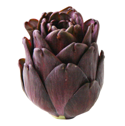 Artichokes Purple Clipart HD