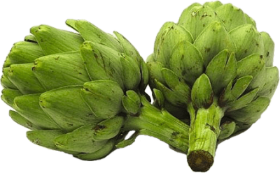 Green Artichokes Clipart PNG Photos