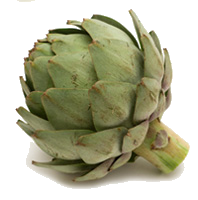 Artichokes Sliced Simple PNG Images
