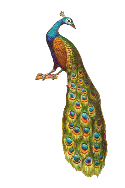 Peacock Art And Wings Png Images PNG Images