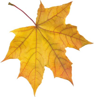 Autumn Leaves Amazing Image Download PNG Images