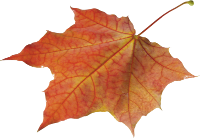Download Autumn Leaves PNG PNG Images