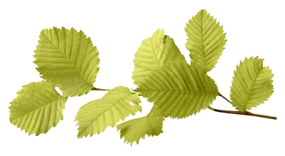 Green Autumn Leaves Cut Out PNG Images