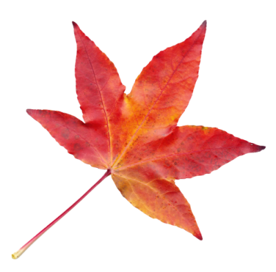 Autumn Leaves Clipart PNG File PNG Images
