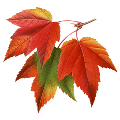 Autumn Leaves Clipart PNG Photos PNG Images