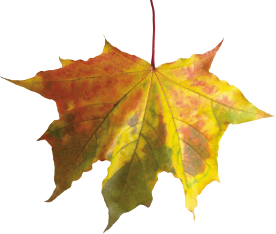 Autumn Leaves HD Photo Png PNG Images