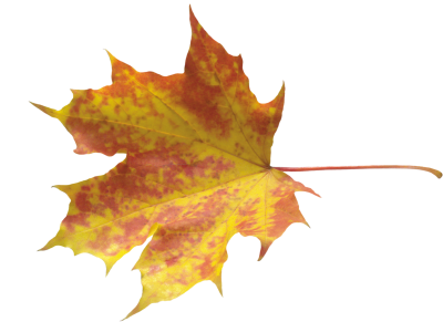 Autumn Leaves Transparent Background
