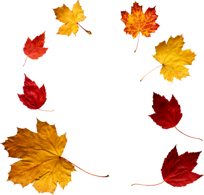 Autumn Leaves Frame Download PNG Images