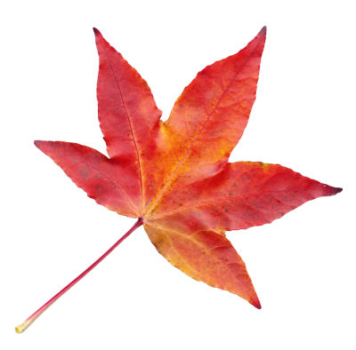 Autumn Leaf Png Transparent Images