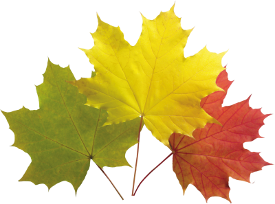 Autumn Leaves Colorful Png PNG Images