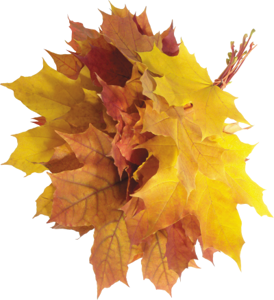 Autumn Png Leaves Images