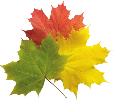 Autumn Png Leaves Pictures PNG Images