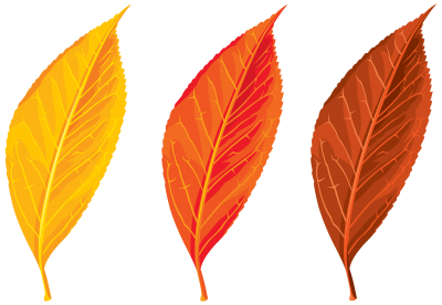 Autumn, Spring, Winter, Seasons, Leaf, Clip Art PNG Images