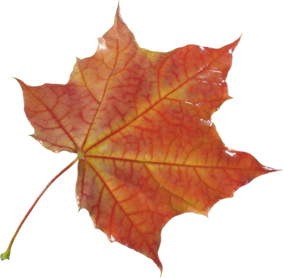 Autumn, Spring, Winter, Seasons, Leaf, Photo PNG Images