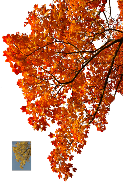 Autumn, Spring, Winter, Seasons, Leaf, Pictures PNG Images