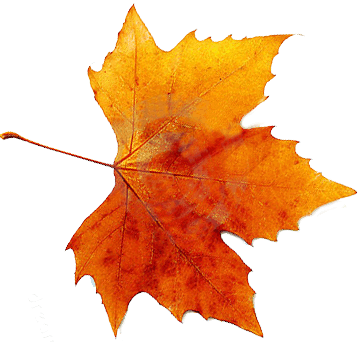 Autumn, Spring, Winter, Seasons, Leaf, Transparent Images